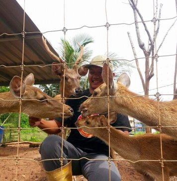 Afia Deer Farm